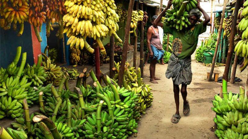 Banana, pomegranate exporters eye Chinese market - The Economic Times