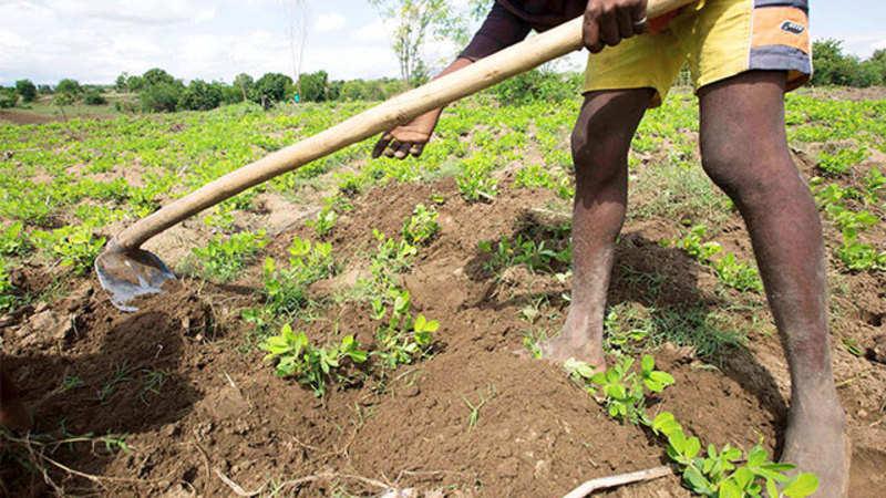 Land records of Delhi's villages go online - The Economic Times