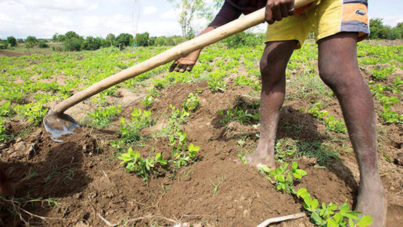 Mobile App launched by company for farmers to hire farm