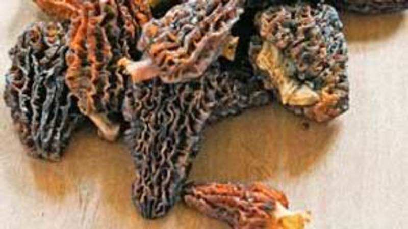Gucchi: Wild mushrooms from Himalayas worth their weight in