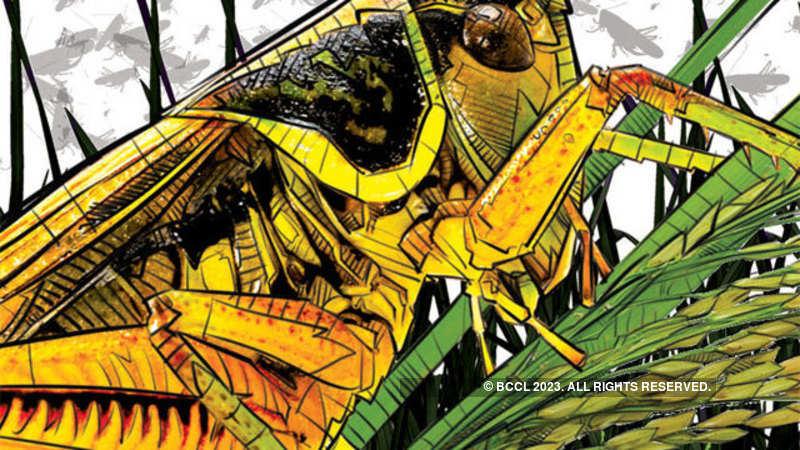 locusts: The missing phenomenon of locust attacks - The