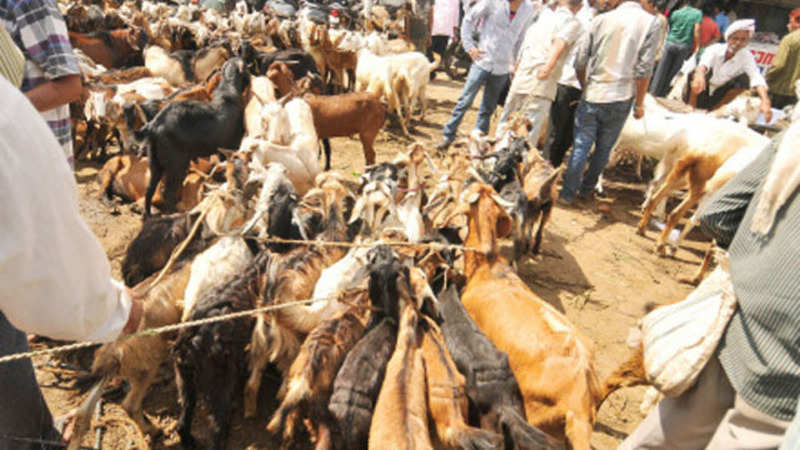 WhatsApp? A goat please: Goat farms becoming tech savvy
