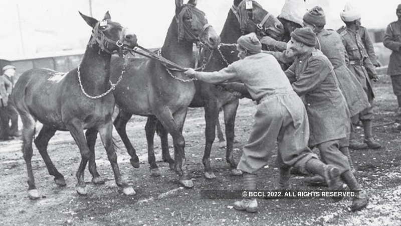The history that mules, mountains and the military share