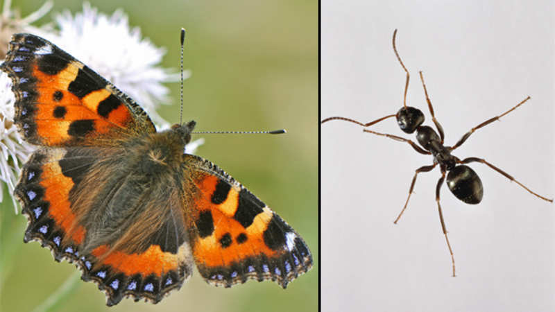 Butterflies, ants battle it out to become UK's favourite