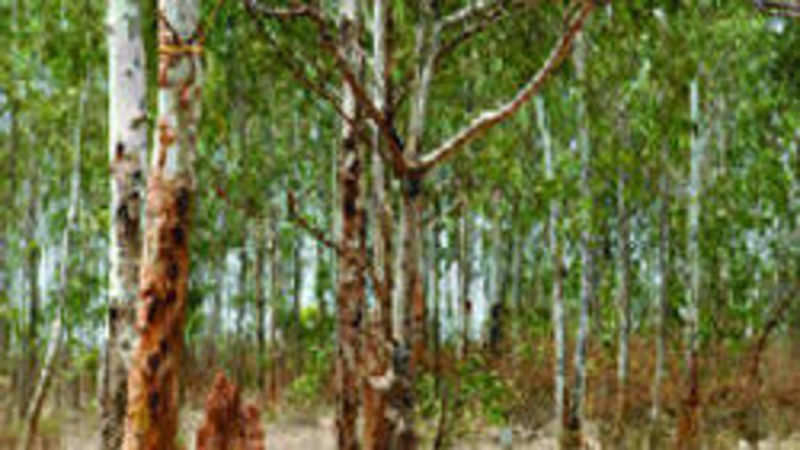 Tamil Nadu's forest college moots insurance scheme for tree