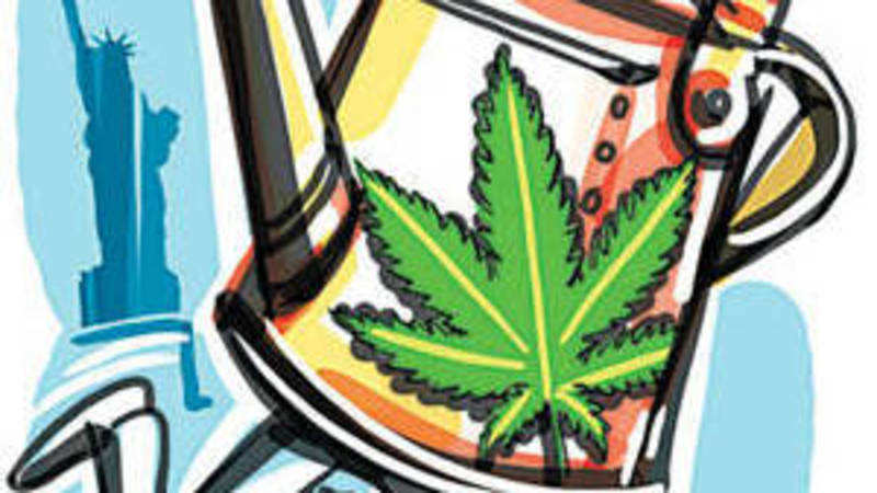 US eases controls on marijuana: Indians in America look to