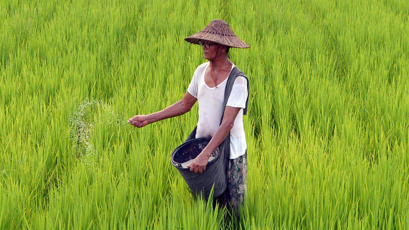Budget 2019: Plantation sector neglected in Union Budget, says planter's body