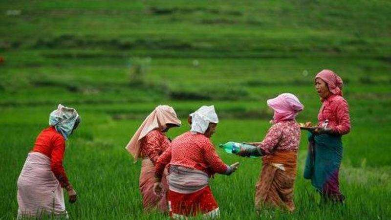 Model contract farming Act to counter price risks: Experts