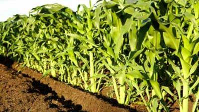 Haryana Agriculture University signs MoU with Ganga Kaveri