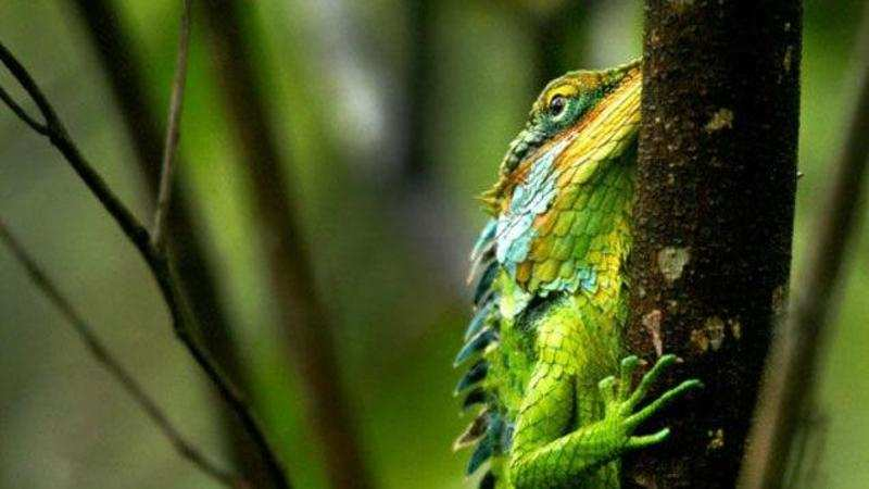 18 reptile species in Western Ghats face threat - The