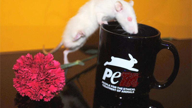 PETA accuses OLX website of trading protected animals - The Economic