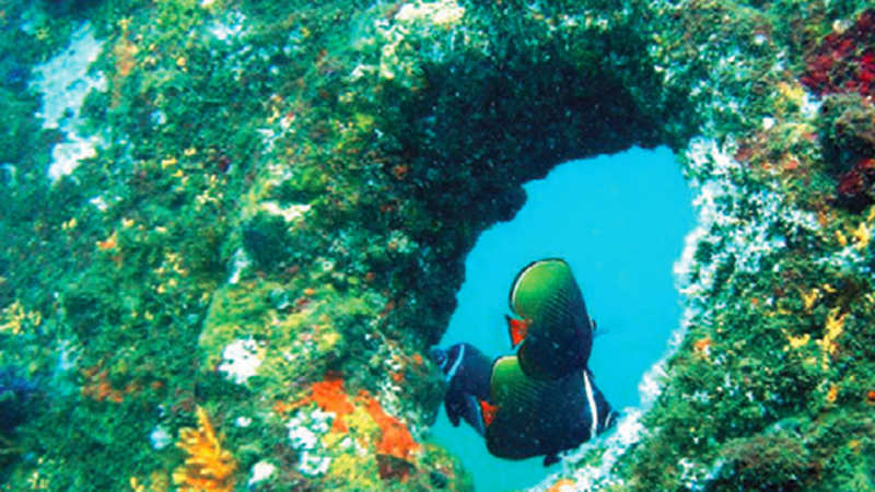 A history of shipwrecks buried in the depths of Goa sea