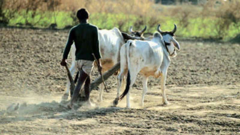 Great rural land rush: 3 to 100-fold rise in farm land prices may