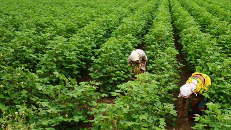 India, Lithuania agree to collaborate in agriculture sector - The