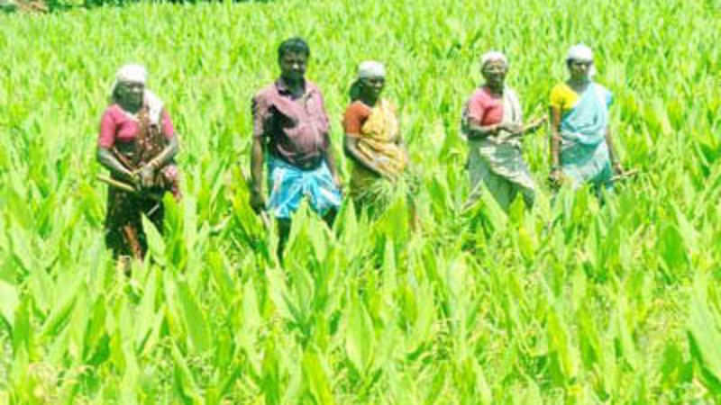 Over 8 67 lakh Tamil Nadu farmers left agriculture in the last