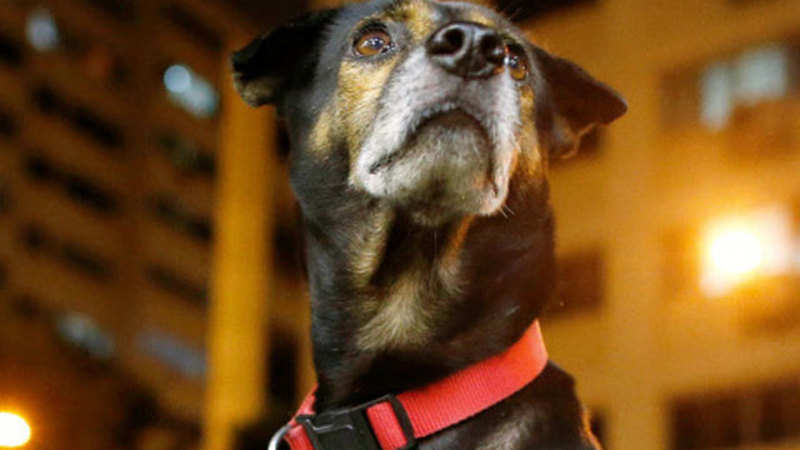 Now, buying a pet just a click away on websites like OLX and Quikr