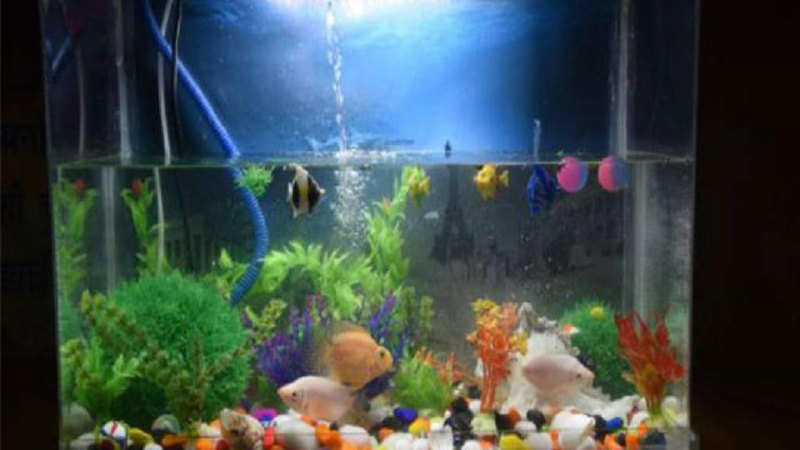 Ornamental fish industry hit by new regulations - The Economic Times