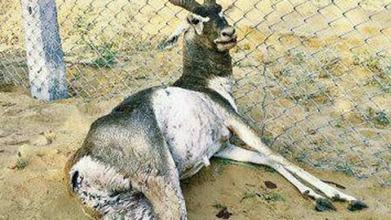 Nuclear threat to Badopal wildlife - The Economic Times