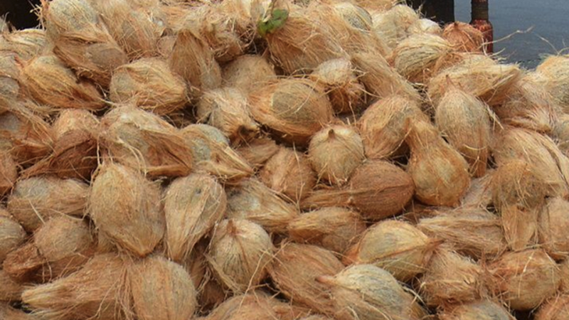 coconut: Coconut product exports see 50% surge - The