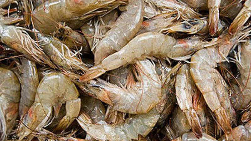 Seafood exports set to cross $10 billion by 2020: Anand