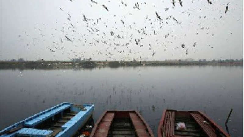 Chhattisgarh to have its first bird sanctuary soon - The
