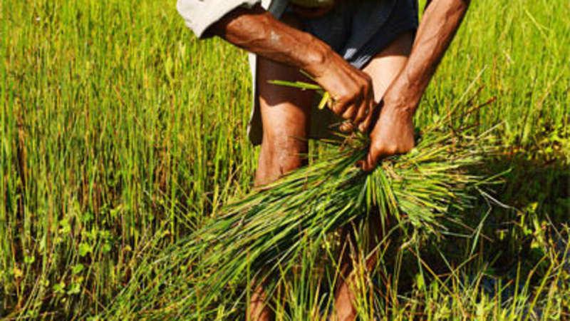 Startups I-Agri, eFarm help Andhra farmers get better deal