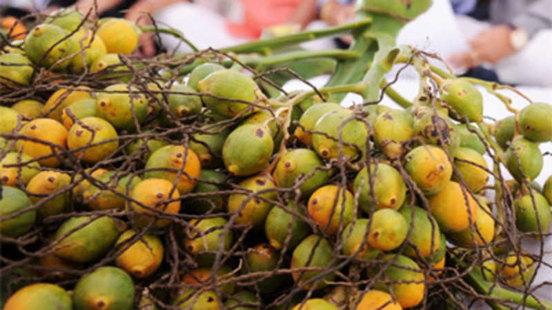 Big imports from Nepal, Sri Lanka pull down areca nut prices - The