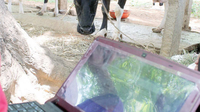 NDDB launches mobile app for dairy farmers - The Economic Times