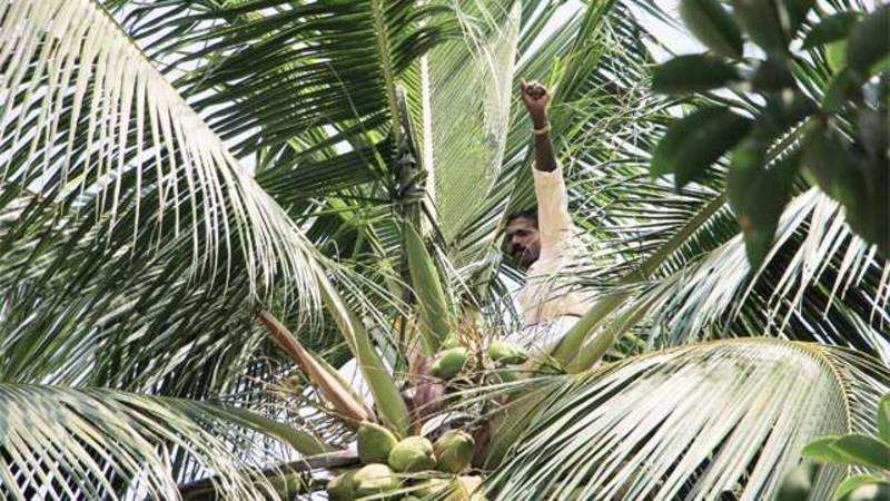 Export of coconut & coconut products grow in rupee terms