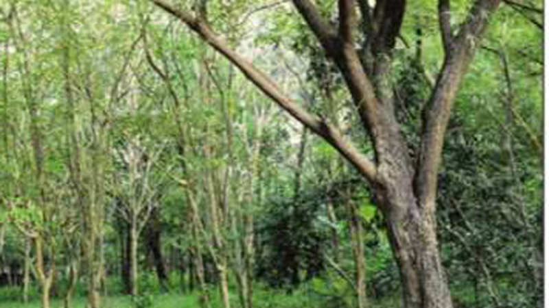Farmers can now grow and harvest trees in 128 taluks of Karnataka