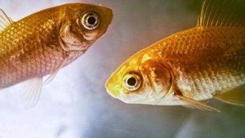 Public aquaria, dog breeding registry now a must to fight