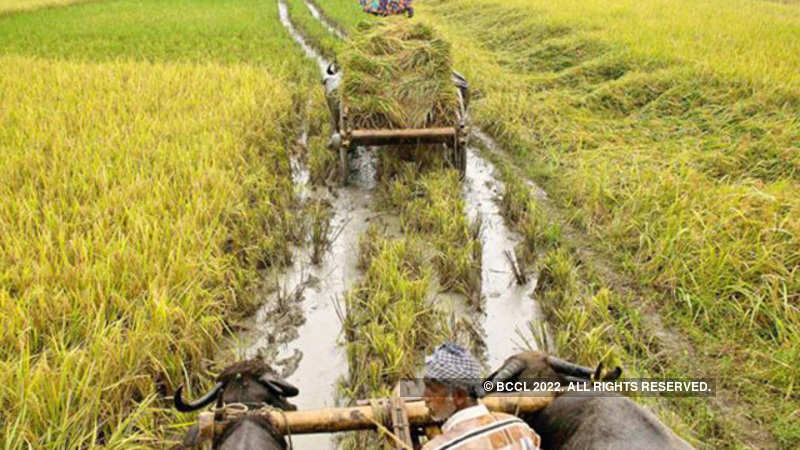 Agriculture: Rs 5kcr micro-irrigation fund: Agriculture