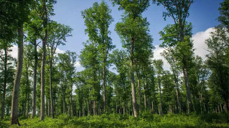 India among top 10 nations in terms of forest area - The