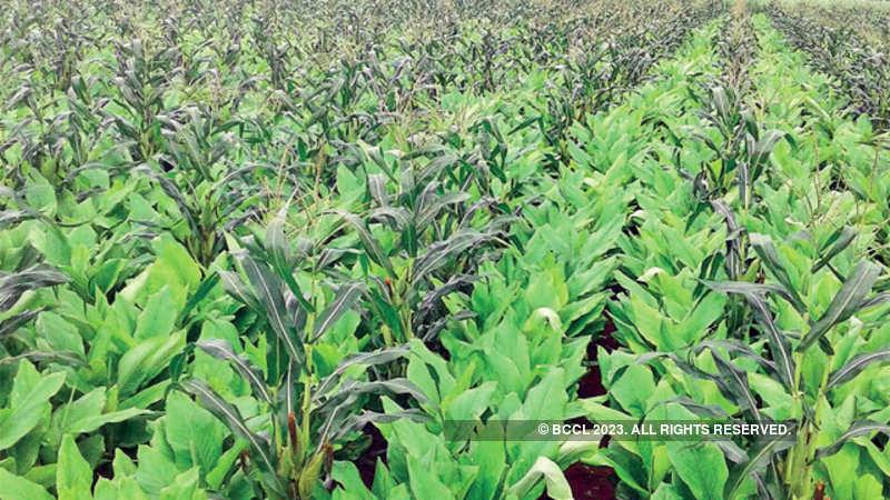 farmer distress: Karnataka: Congress govt claims it tackled