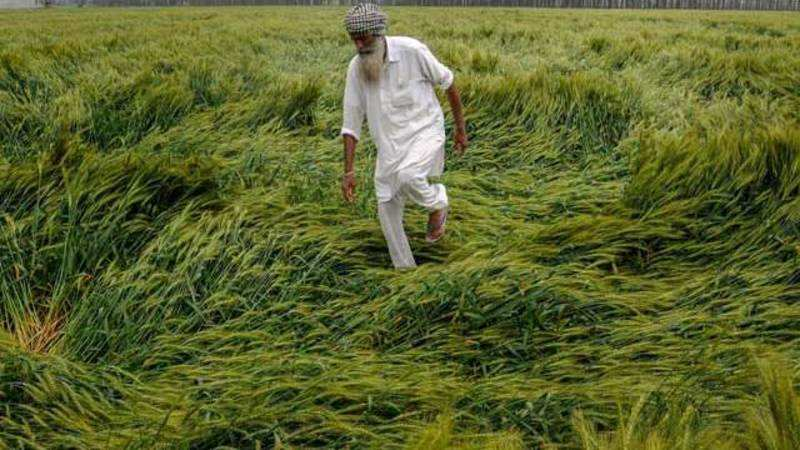 Rain: Unseasonal rain damages crops in north India - The