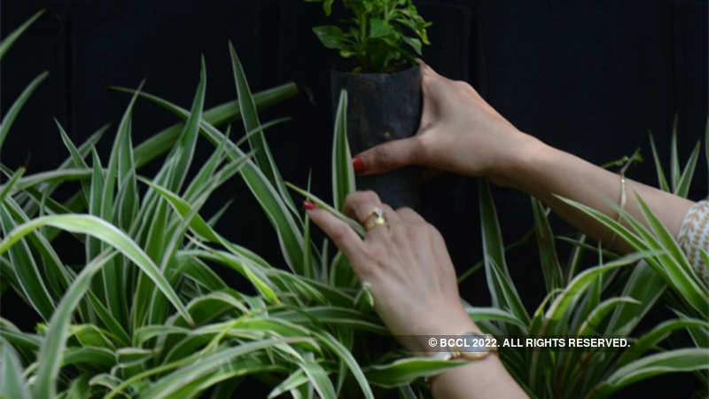 Planting a tree? You can access government's nurseries online - The