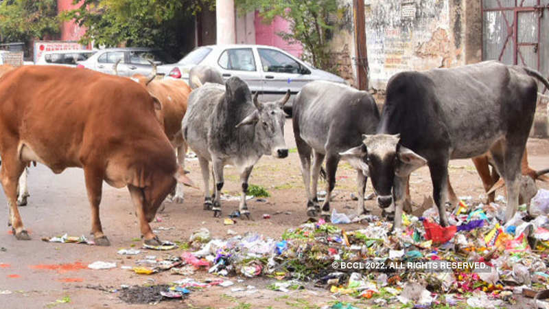 After stamp duty, Rajasthan govt imposes 20% cess on liquor for cow