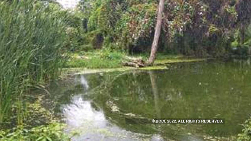 Once a lifeline, this 975-year-old Pattandur Agrahara lake