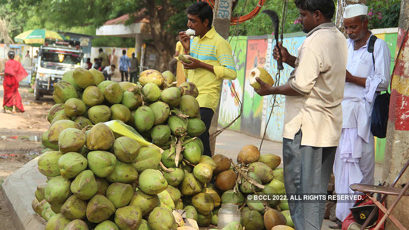 Heavy rains in Kerala to increase coconut yield - The