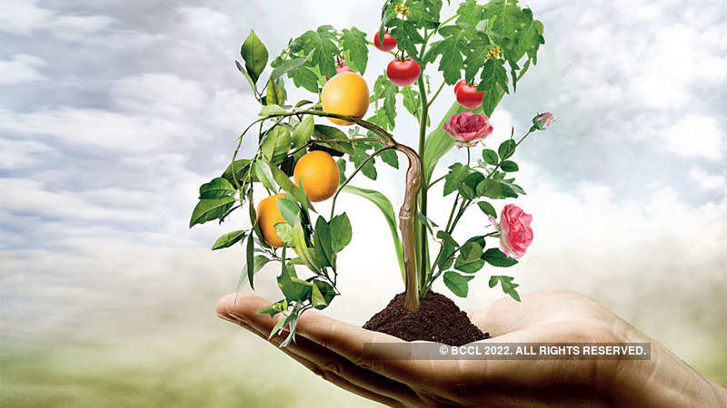 horticulture: As a horticulture boom pushes up farm incomes, here