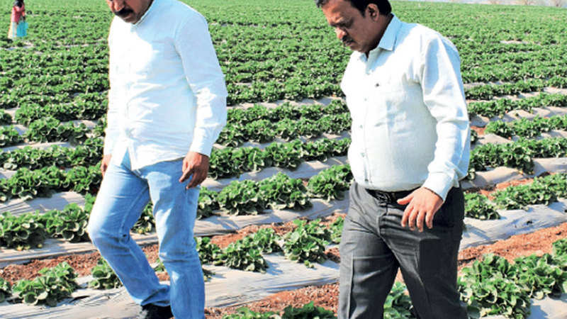 How farmer producer company model can transform Indian