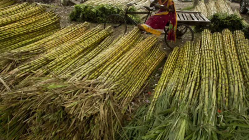 UP govt may add SAP to its Sugarcane - The Economic Times