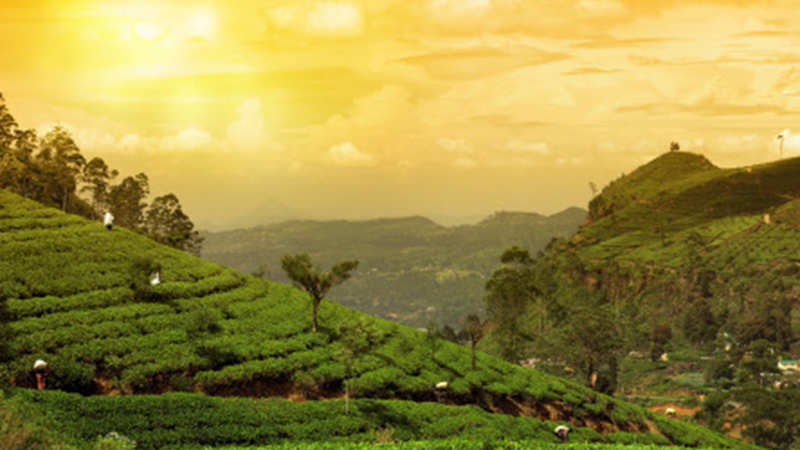Darjeeling planters claim tea imported from Nepal is not