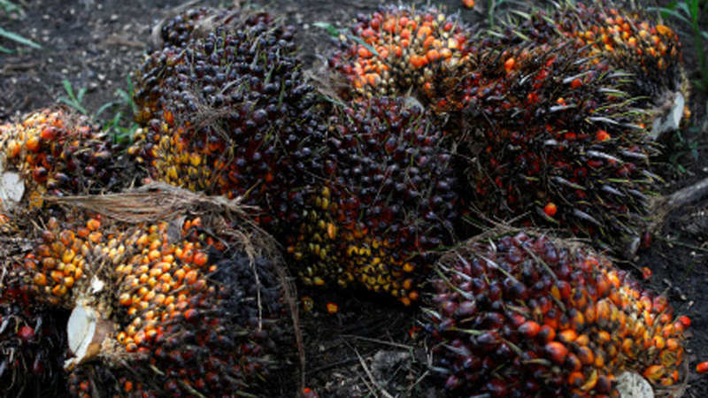 Reducing palm oil duty a death knell for India's refining industry