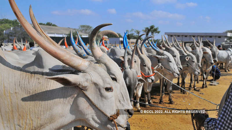 Great Indian cattle count: An inside story - The Economic Times