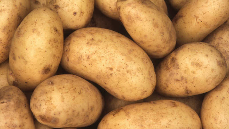 potato: Potato prices fall 30% in UP, 50% in West Bengal
