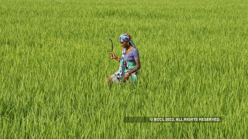 India-Pakistan standoff: Farmers in border areas at