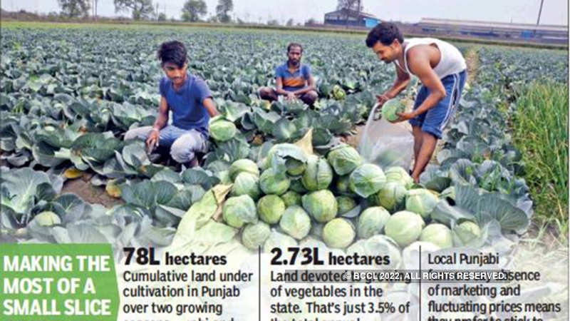 Migrant hands are scripting a veggie success story in Punjab