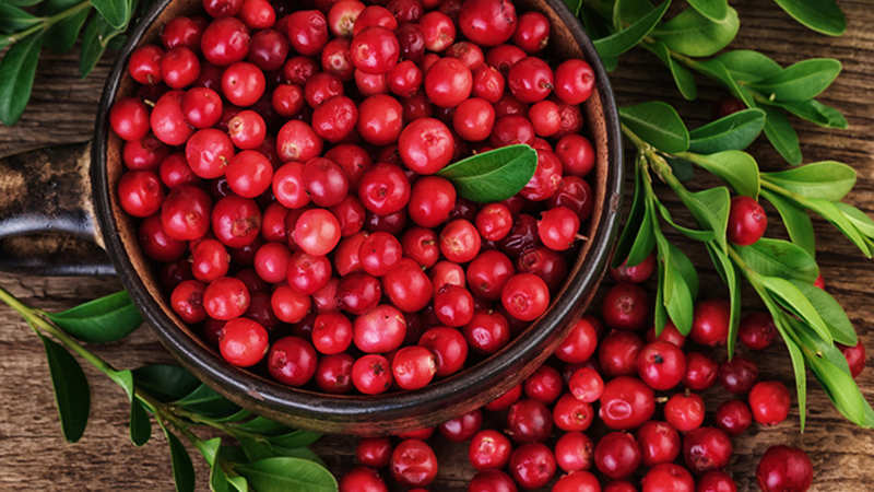 Berry boost: This fruit can combat bacterial infections