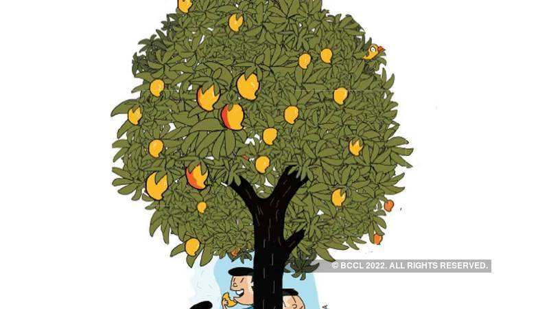 Perfect mangoes for the perfect Indian summer - The Economic